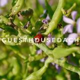 "Изображение гостевого дома ""Guest House Dacha"" #61"