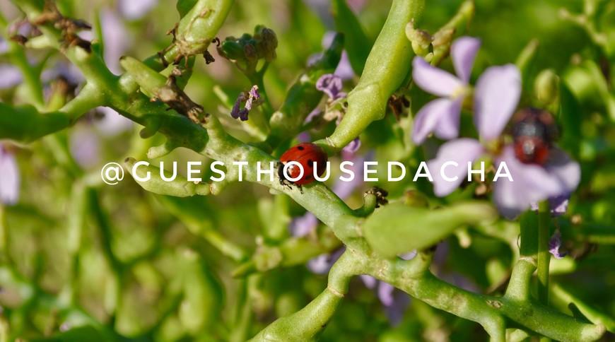 "Изображение гостевого дома ""Guest House Dacha"" #27"
