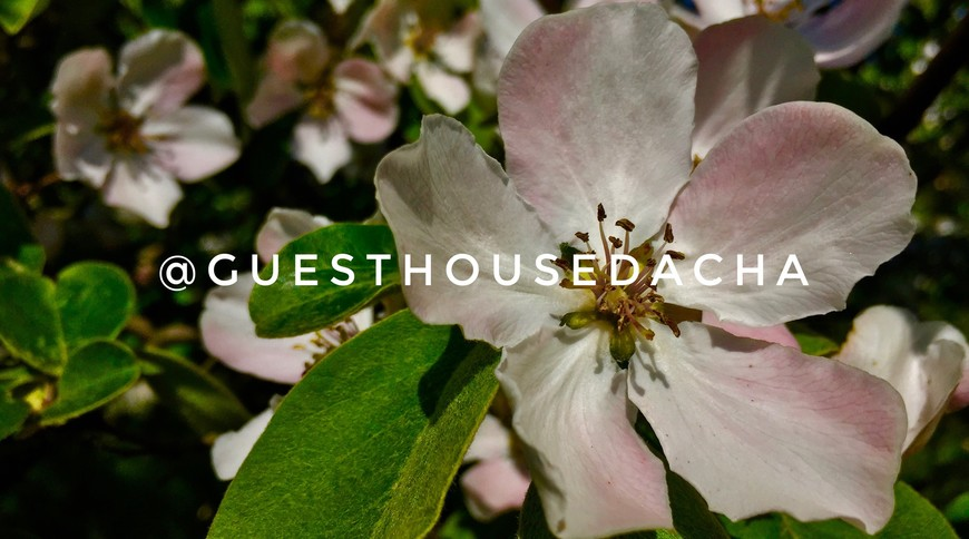 "Изображение гостевого дома ""Guest House Dacha"" #28"