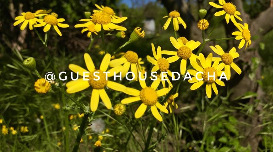 "Изображение гостевого дома ""Guest House Dacha"" #29"