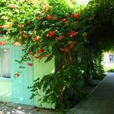 """Изображение пансионата """"Зеленый дворик"""" #13"""
