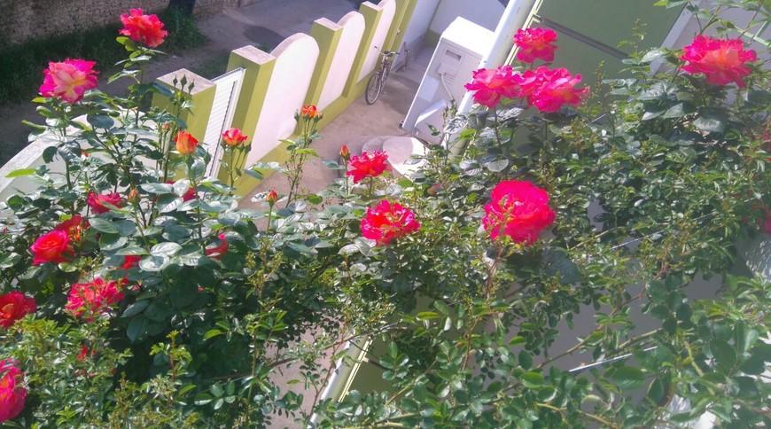 """Изображение гостевого дома """"Маленький Рай"""" #4"""