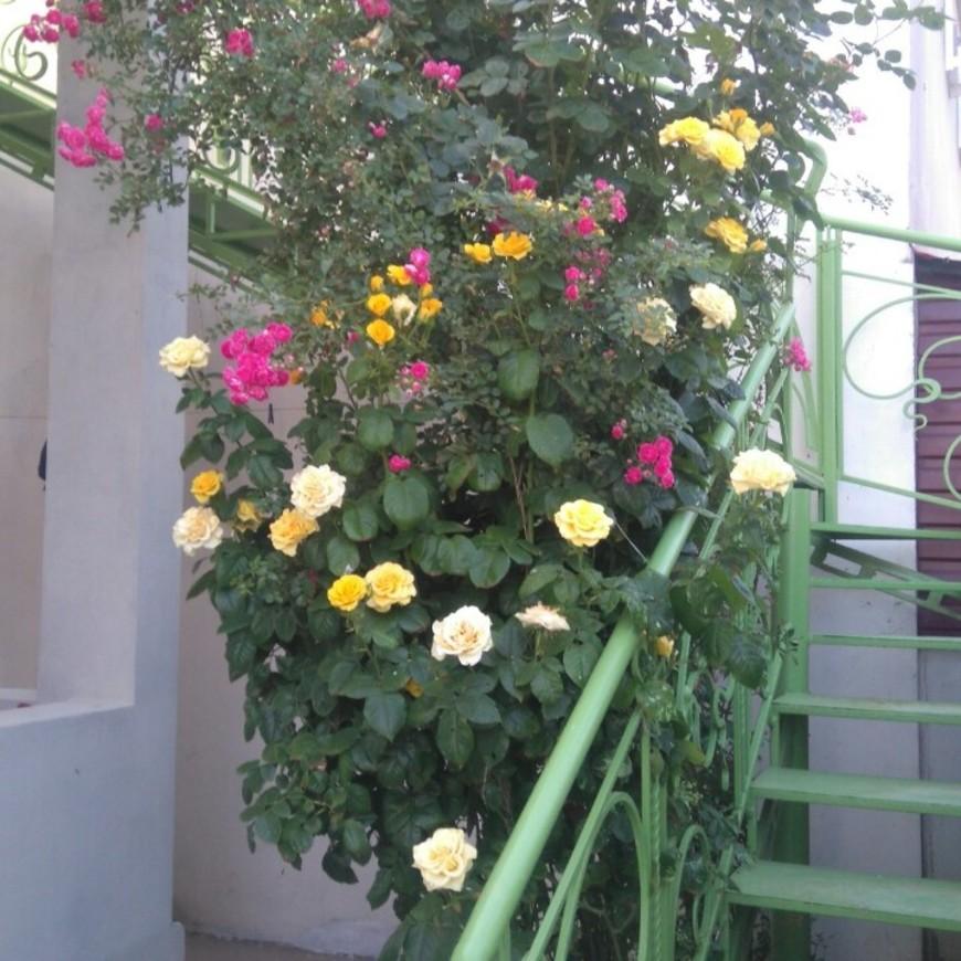 """Изображение гостевого дома """"Маленький Рай"""" #7"""