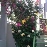 """Изображение гостевого дома """"Маленький Рай"""" #85"""