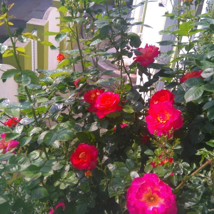 """Изображение гостевого дома """"Маленький Рай"""" #16"""