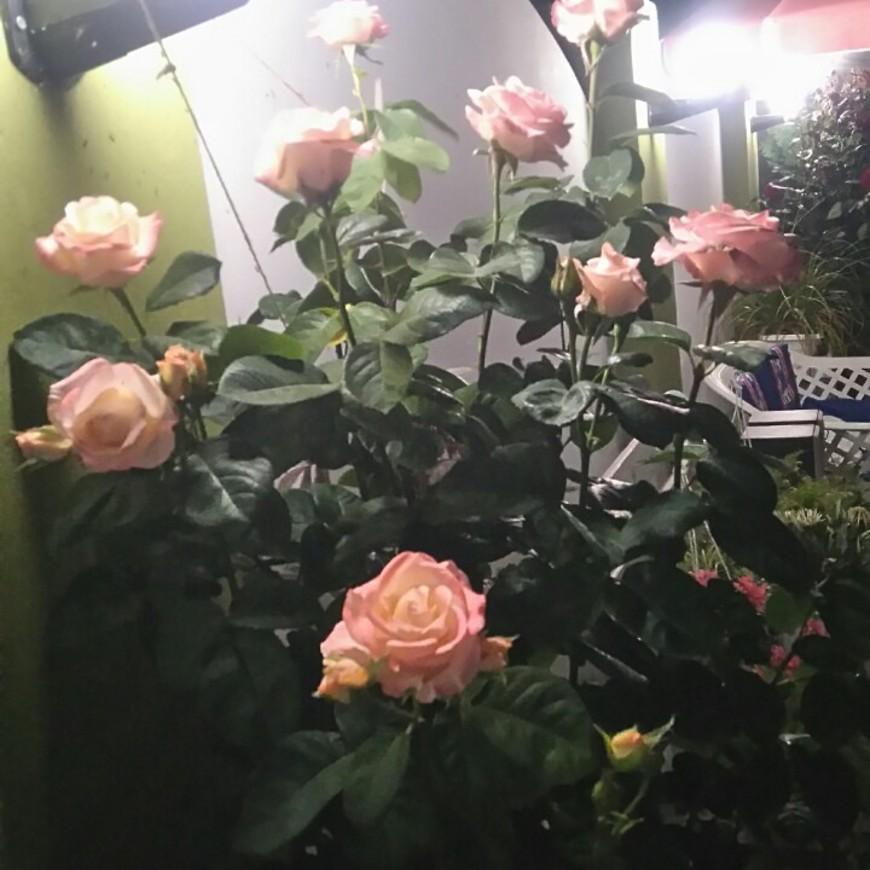 """Изображение гостевого дома """"Маленький Рай"""" #28"""