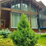 """Изображение отеля """"Austrian Cottage"""" #12"""