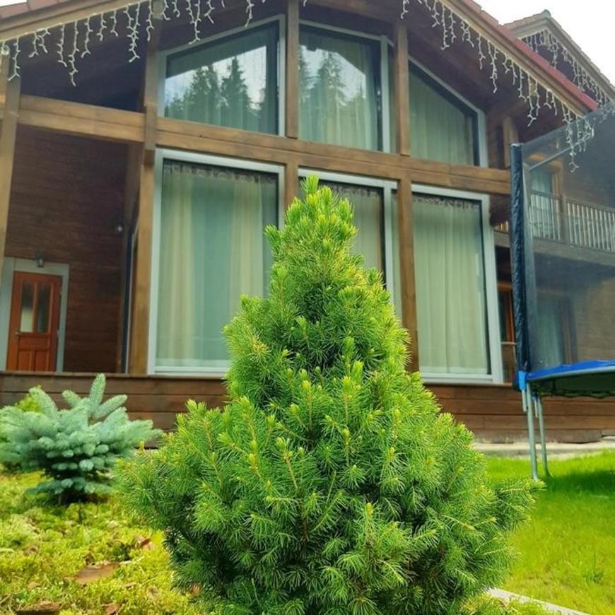 """Изображение отеля """"Austrian Cottage"""" #5"""