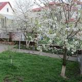 """Изображение гостевого дома """"Green Hill"""" #25"""