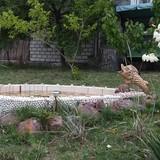 """Изображение гостевого дома """"Золотая Рыбка"""" #28"""