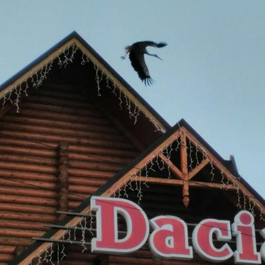 """Изображение отеля """" Dacia"""" #18"""