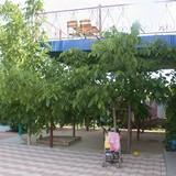 "Изображение мини-отеля ""Лелека"" #24"